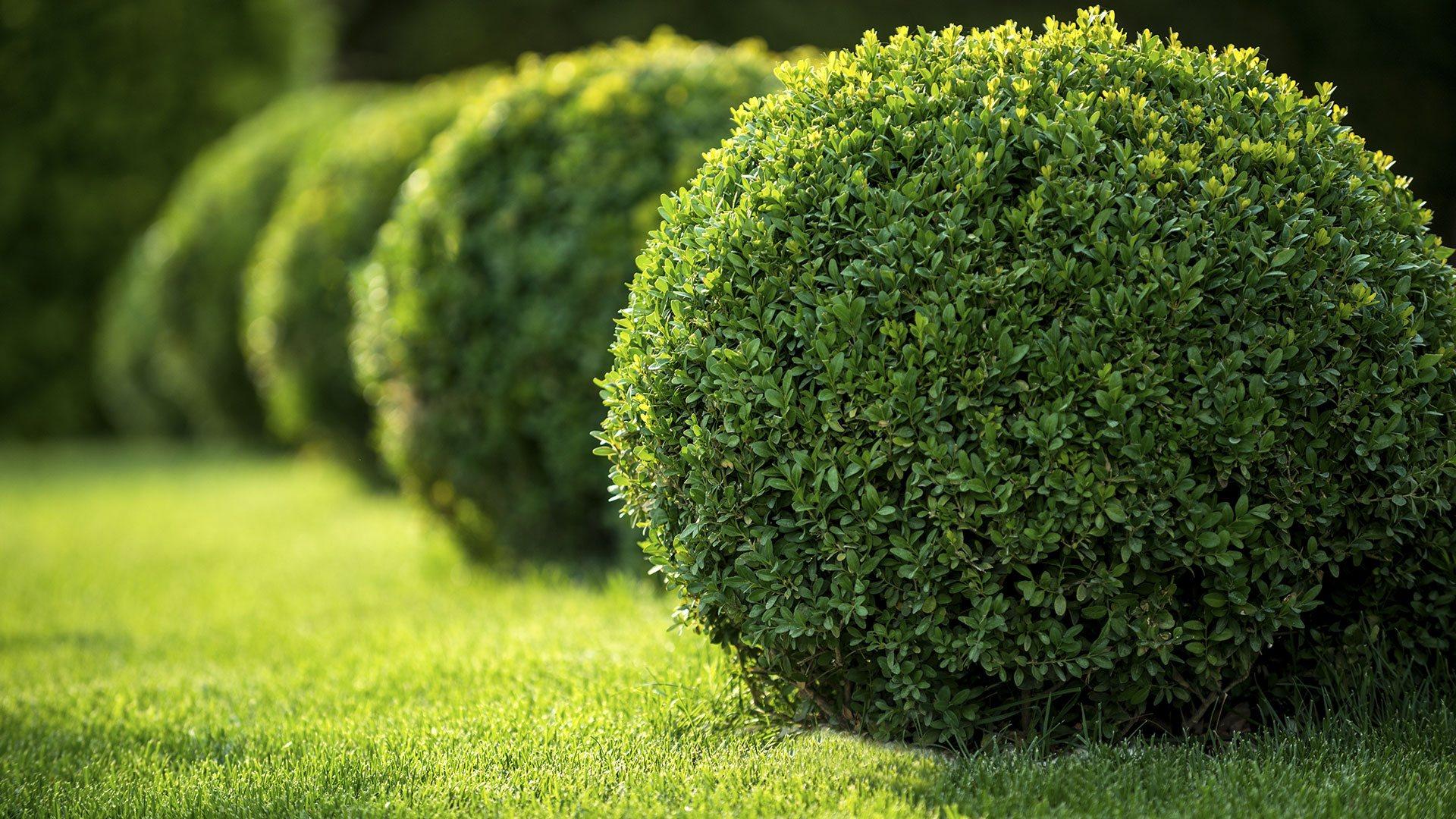 Conejo Complete Landscape Inc. Landscape Maintenance, Landscape Installation and Lawn Care slide 3